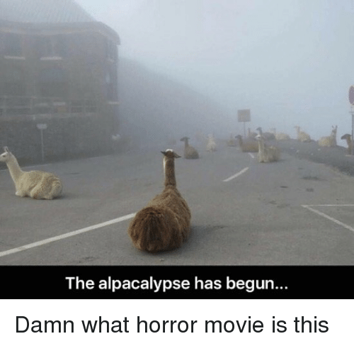 🐣 25+ Best Memes About Movie Is   Movie Is Memes