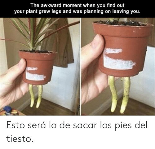 Awkward, Tiesto, and Awkward Moment: The awkward moment when you find out  your plant grew legs and was planning on leaving you. Esto será lo de sacar los pies del tiesto.