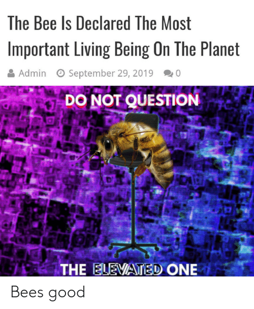 Good, Living, and Bees: The Bee Is Declared The Most  Important Living Being On The Planet  Admin  September 29, 2019  0  DO NOT QUESTION  THE ELEVATED ONE Bees good