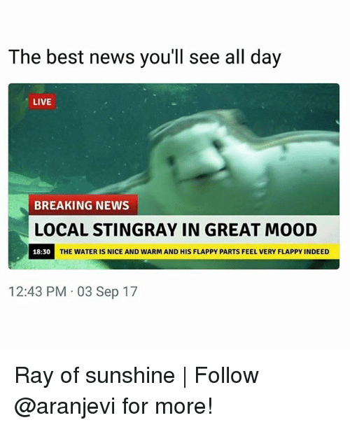 Greates: The best news you'll see all day  LIVE  BREAKING NEWS  LOCAL STINGRAY IN GREAT MOOD  18:30  THE WATER IS NICE AND WARM AND HIS FLAPPY PARTS FEEL VERY FLAPPY INDEED  12:43 PM 03 Sep 17 Ray of sunshine | Follow @aranjevi for more!