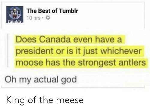 God, Tumblr, and Best: The Best of Tumblr  tumblrT0 hrs  Does Canada even have a  president or is it just whichever  moose has the strongest antlers  Oh my actual god King of the meese