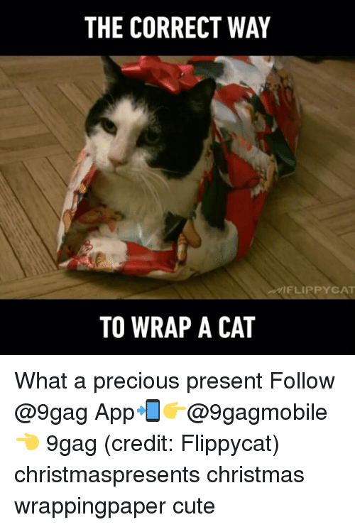 –¡: THE CORRECT WAY  FLIP PYCAT  TO WRAP A CAT What a precious present Follow @9gag App📲👉@9gagmobile 👈 9gag (credit: Flippycat) christmaspresents christmas wrappingpaper cute