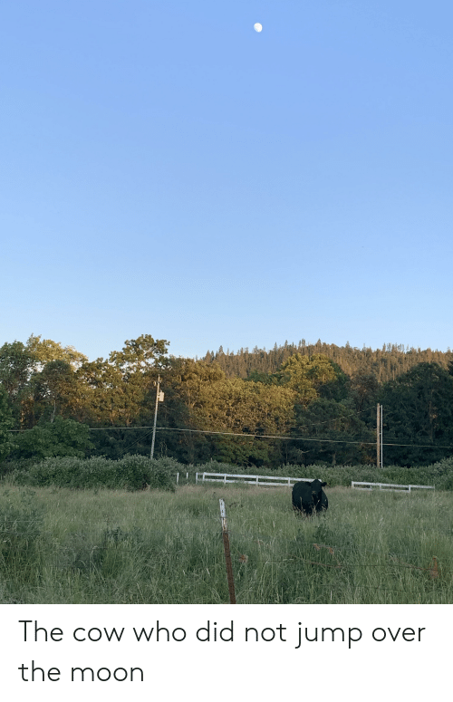 Moon, Cow, and Who: The cow who did not jump over the moon