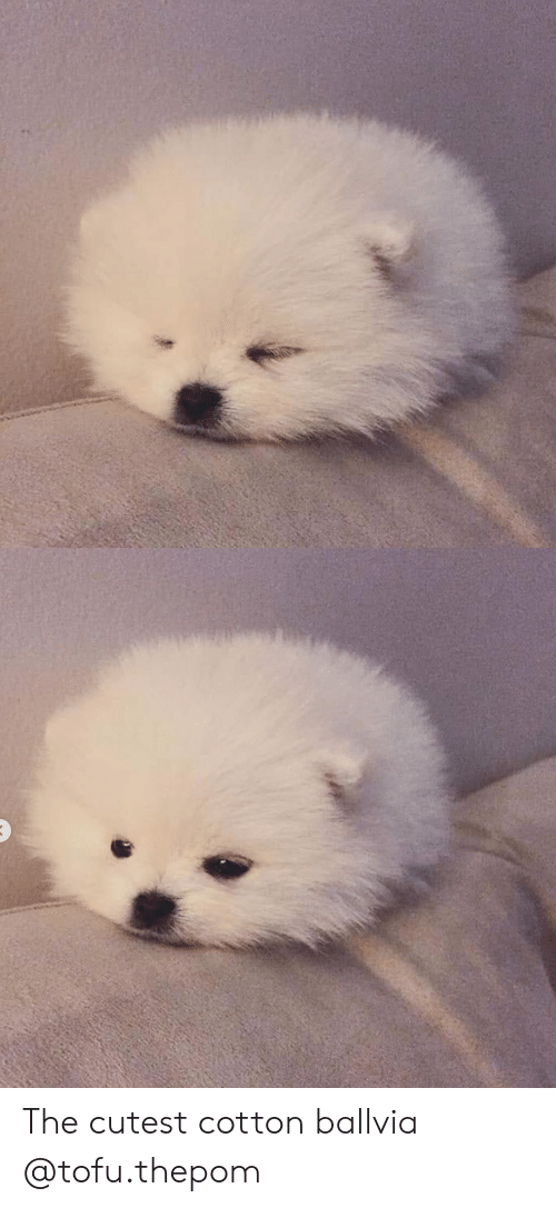 Instagram, Target, and Blank: The cutest cotton ballvia @tofu.thepom