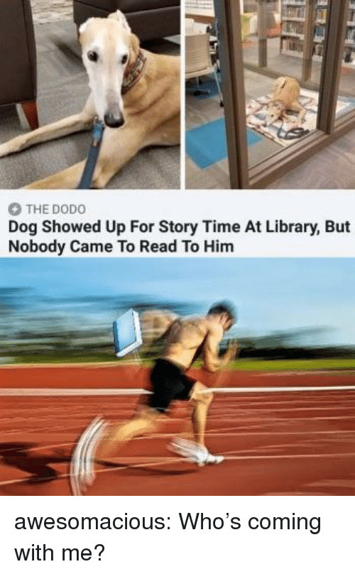 Tumblr, Blog, and Http: THE DODO  Dog Showed Up For Story Time At Library, But  Nobody Came To Read To Him awesomacious:  Who's coming with me?