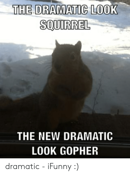 🐣 25+ Best Memes About Dramatic Look Gopher | Dramatic Look