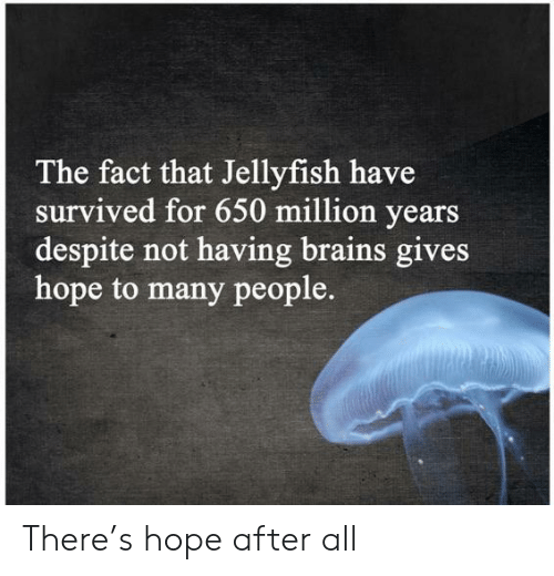 Brains, Hope, and Jellyfish: The fact that Jellyfish have  survived for 650 million years  despite not having brains gives  hope to many people. There's hope after all
