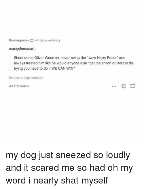 """Shatted: the-imgurianvintage-misery  orangelemonart:  Shout out to Oliver Wood for never being like """"wow Harry Potter"""" and  always treated him like he would anyone else """"get the snitch or literally die  trying you have to do it WE CAN WIN""""  Source: orangelemonart  40,159 notes my dog just sneezed so loudly and it scared me so had oh my word i nearly shat myself"""
