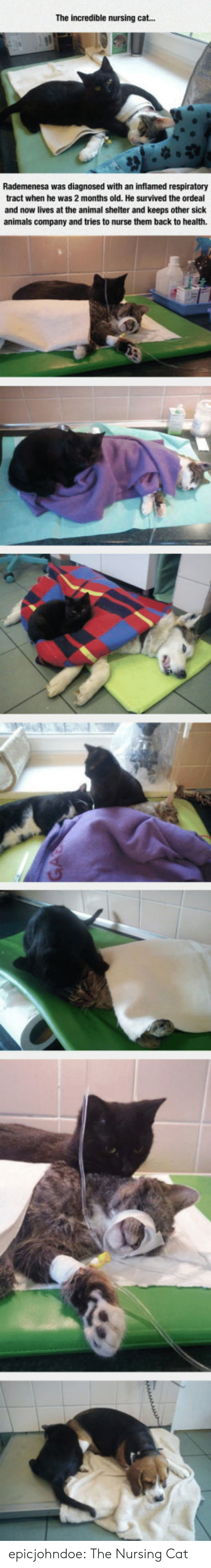 Animals, Tumblr, and Animal: The incredible nursing cat...  Rademenesa was diagnosed with an inflamed respiratory  tract when he was 2 months old. He survived the ordeal  and now lives at the animal shelter and keeps other sick  animals company and tries to nurse them back to health. epicjohndoe:  The Nursing Cat