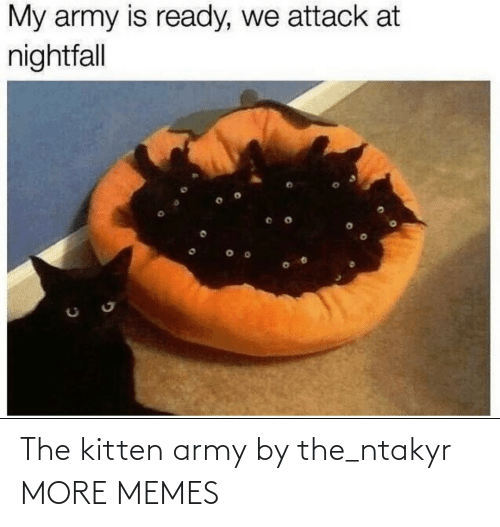 alt: The kitten army by the_ntakyr MORE MEMES