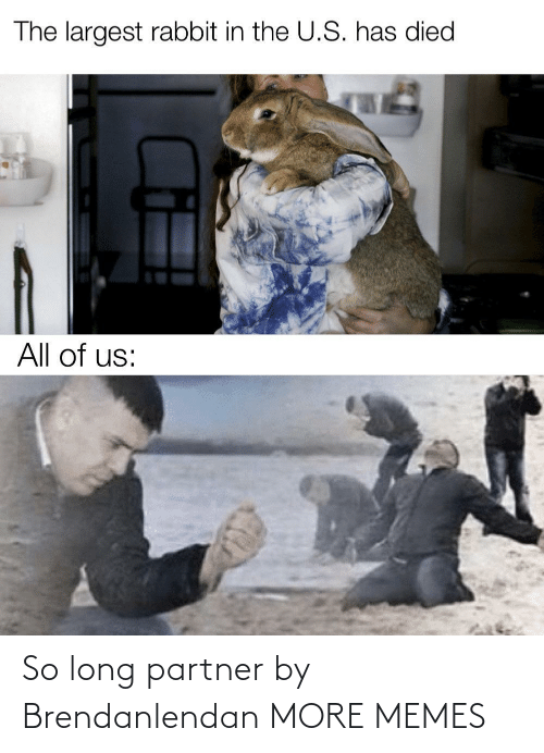 All Of: The largest rabbit in the U.S. has died  All of us: So long partner by Brendanlendan MORE MEMES