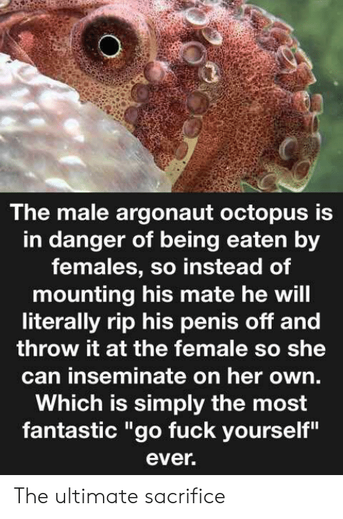 "Fuck, Octopus, and Penis: The male argonaut octopus is  in danger of being eaten by  females, so instead of  mounting his mate he will  literally rip his penis off and  throw it at the female so she  can inseminate on her own.  Which is simply the most  fantastic ""go fuck yourself""  ever. The ultimate sacrifice"