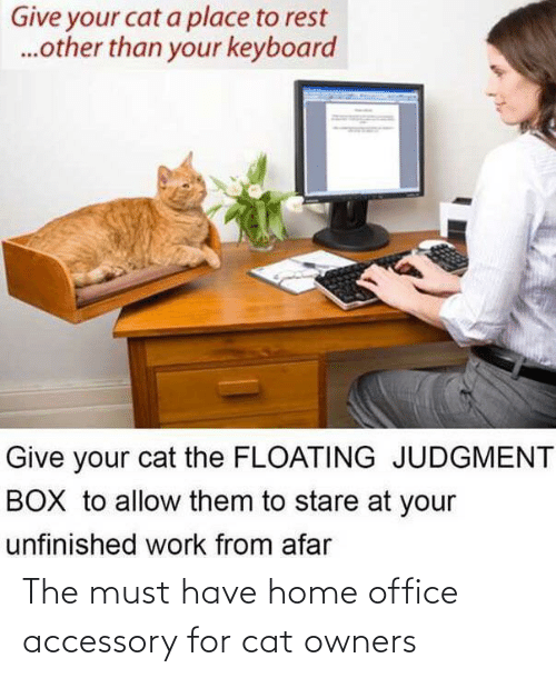 Home: The must have home office accessory for cat owners