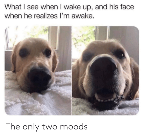 Moods: The only two moods