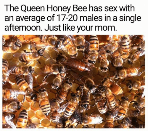 afternoon: The Queen Honey Bee has sex with  an average of 17-20 males in a single  afternoon. Just like your mom.