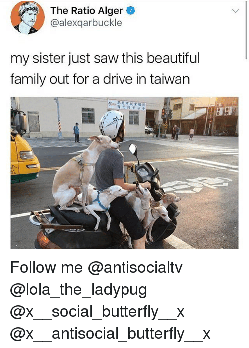 The Ratio: The Ratio Alger  @alexqarbuckle  my sister just saw this beautiful  family out for a drive in taiwan  商業闪業公會  , Follow me @antisocialtv @lola_the_ladypug @x__social_butterfly__x @x__antisocial_butterfly__x