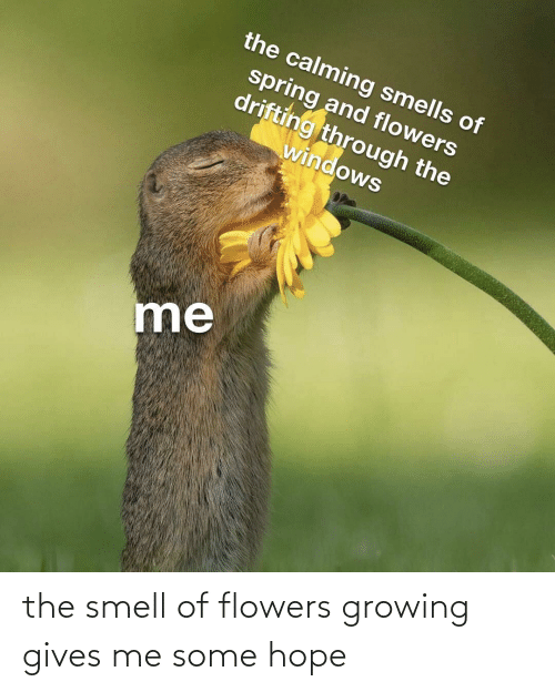 Gives: the smell of flowers growing gives me some hope