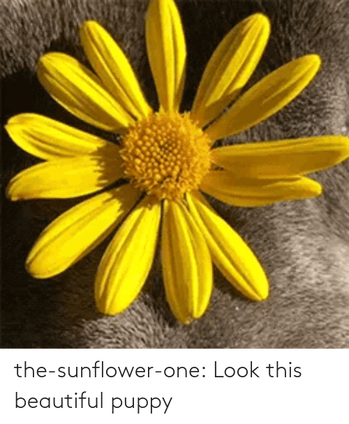 sunflower: the-sunflower-one: Look this beautiful puppy