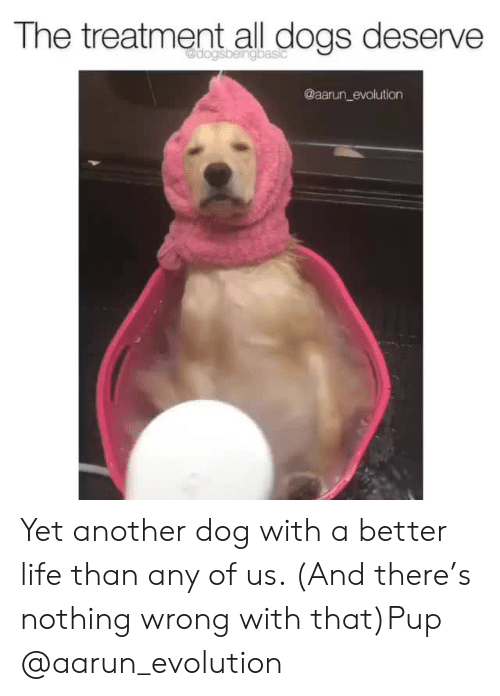 Dogs, Instagram, and Life: The treatment all dogs deserve  @aarun_evolution Yet another dog with a better life than any of us. (And there's nothing wrong with that)Pup @aarun_evolution