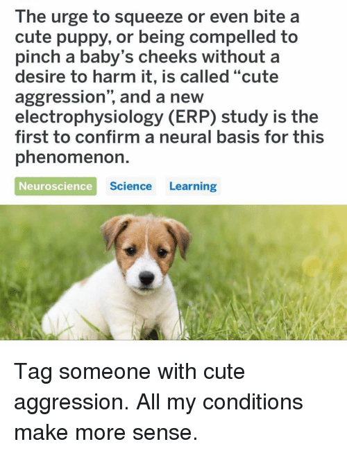 """Cute, Memes, and Puppy: The urge to squeeze or even bite a  cute puppy, or being compelled to  pinch a baby's cheeks without a  desire to harm it, is called """"cute  aggression"""", and a new  electrophysiology (ERP) study is the  first to confirm a neural basis for this  phenomenoh.  Neuroscience  Science Learning Tag someone with cute aggression. All my conditions make more sense."""
