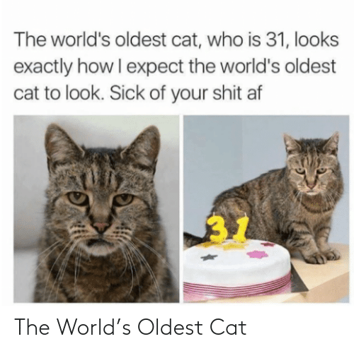 World: The World's Oldest Cat