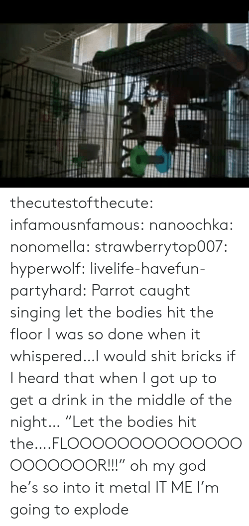 """Bodies : thecutestofthecute: infamousnfamous:   nanoochka:  nonomella:  strawberrytop007:  hyperwolf:  livelife-havefun-partyhard:  Parrot caught singing let the bodies hit the floor  I was so done when it whispered…I would shit bricks if I heard that when I got up to get a drink in the middle of the night…  """"Let the bodies hit the….FLOOOOOOOOOOOOOOOOOOOOOR!!!""""  oh my god he's so into it  metal   IT ME   I'm going to explode"""