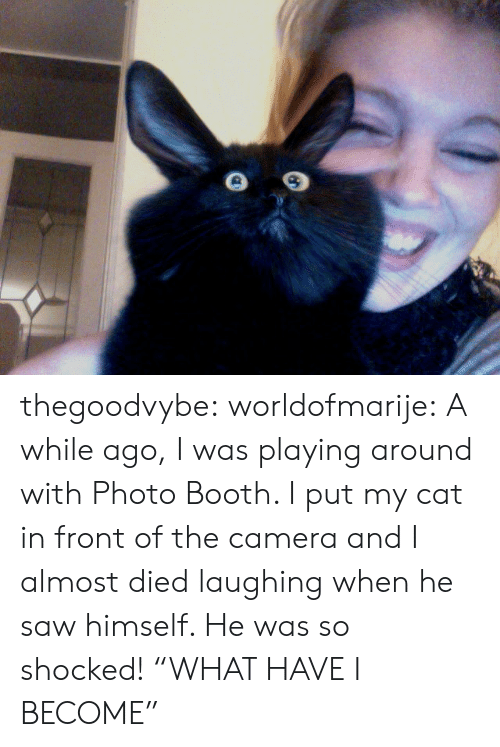"""Saw, Tumblr, and Blog: thegoodvybe: worldofmarije:  A while ago, I was playing around with Photo Booth. I put my cat in front of the camera and I almost died laughing when he saw himself. He was so shocked!  """"WHAT HAVE I BECOME"""""""