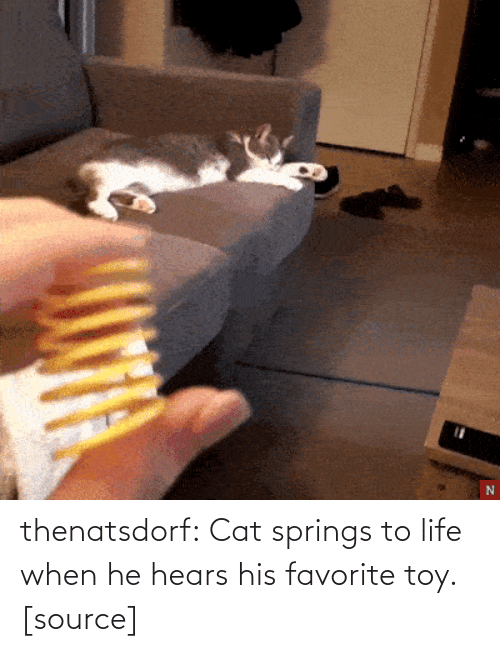 Life, Target, and Tumblr: thenatsdorf:  Cat springs to life when he hears his favorite toy. [source]