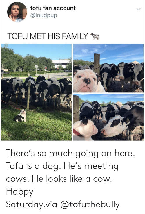 meeting: There's so much going on here. Tofu is a dog. He's meeting cows. He looks like a cow. Happy Saturday.via @tofuthebully
