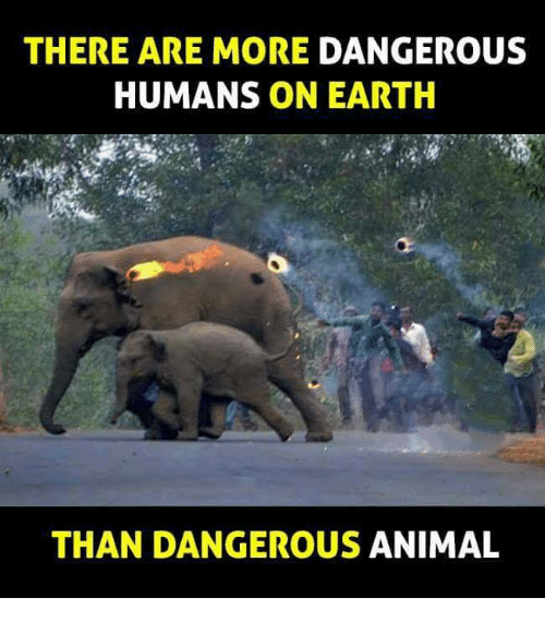 Memes, Animal, and Earth: THERE ARE MORE DANGEROUS  HUMANS ON EARTH  THAN DANGEROUS ANIMAL