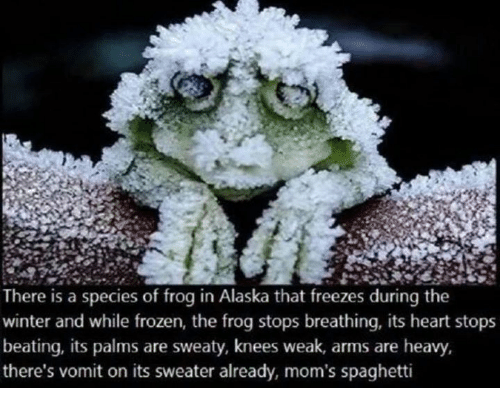 moms spaghetti: There is a species of frog in Alaska that freezes during the  winter and while frozen, the frog stops breathing, its heart stops  beating, its palms are sweaty, knees weak, arms are heavy,  there's vomit on its sweater already, mom's spaghetti