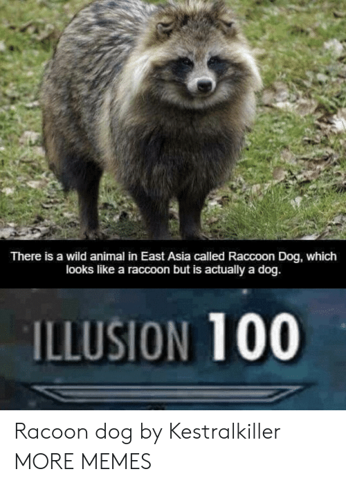 Dank, Memes, and Target: There is a wild animal in East Asia called Raccoon Dog, which  looks like a raccoon but is actually a dog.  ILLUSION 100 Racoon dog by Kestralkiller MORE MEMES