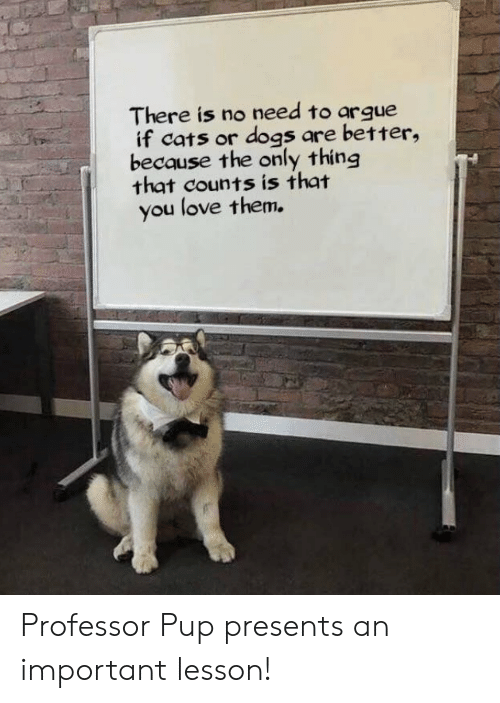 Arguing, Cats, and Dogs: There is no need to argue  if cats or dogs are better,  because the only thing  that counts is that  you love them. Professor Pup presents an important lesson!