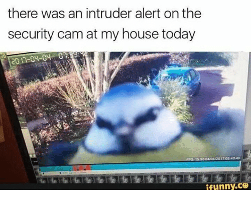 Camming: there was an intruder alert on the  security cam at my house today  ifunny.ce