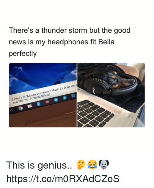 """Geniusism: There's a thunder storm but the good  news is my headphones fit Bella  perfectly  Hours of 'Anxiety Prevention"""" Music for Dogs and  and Storms Problem Solved! This is genius.. 🤔😂🐶 https://t.co/m0RXAdCZoS"""