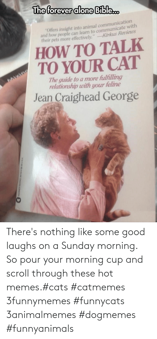 Scroll: There's nothing like some good laughs on a Sunday morning.  So pour your morning cup and scroll through these hot memes.#cats #catmemes 3funnymemes #funnycats 3animalmemes #dogmemes #funnyanimals