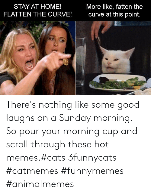 Scroll: There's nothing like some good laughs on a Sunday morning.  So pour your morning cup and scroll through these hot memes.#cats 3funnycats #catmemes #funnymemes #animalmemes