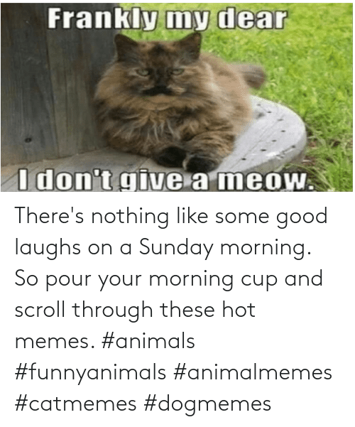 Animals: There's nothing like some good laughs on a Sunday morning.  So pour your morning cup and scroll through these hot memes. #animals #funnyanimals #animalmemes #catmemes #dogmemes