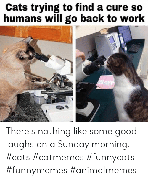 nothing: There's nothing like some good laughs on a Sunday morning. #cats #catmemes #funnycats #funnymemes #animalmemes