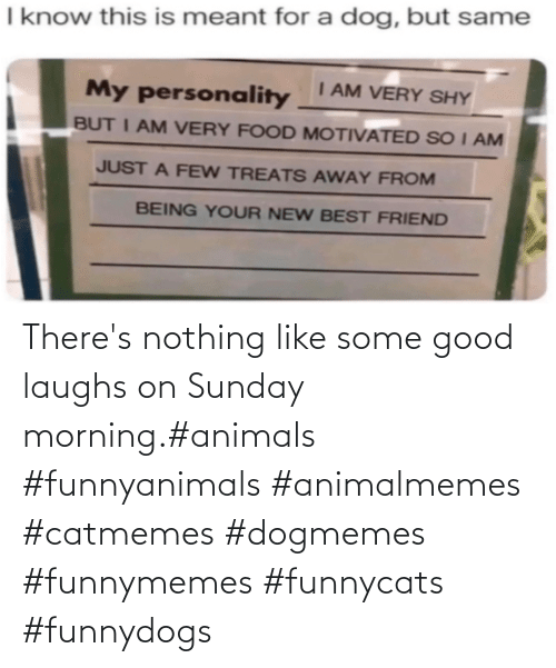 nothing: There's nothing like some good laughs on Sunday morning.#animals #funnyanimals #animalmemes #catmemes #dogmemes #funnymemes #funnycats #funnydogs