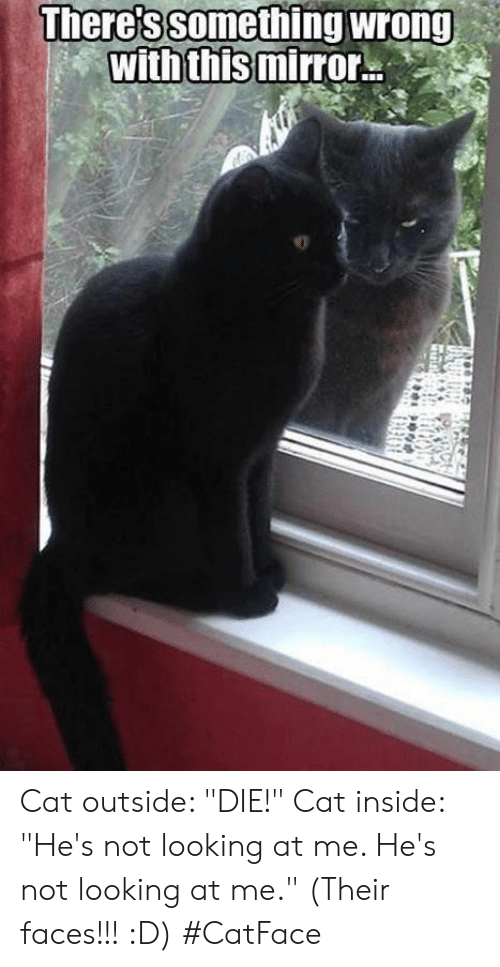 "Mirror, Cat, and Looking: There's something wrong  with this mirror Cat outside: ""DIE!"" Cat inside: ""He's not looking at me. He's not looking at me."" (Their faces!!! :D) #CatFace"