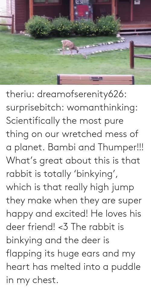 planet: theriu: dreamofserenity626:  surprisebitch:  womanthinking:  Scientifically the most pure thing on our wretched mess of a planet.  Bambi and Thumper!!!  What's great about this is that rabbit is totally'binkying', which is that really high jump they make when they are super happy and excited! He loves his deer friend! <3  The rabbit is binkying and the deer is flapping its huge ears and my heart has melted into a puddle in my chest.
