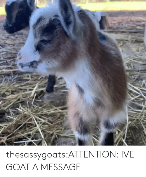 Target, Tumblr, and Goat: thesassygoats:ATTENTION: IVE GOAT A MESSAGE