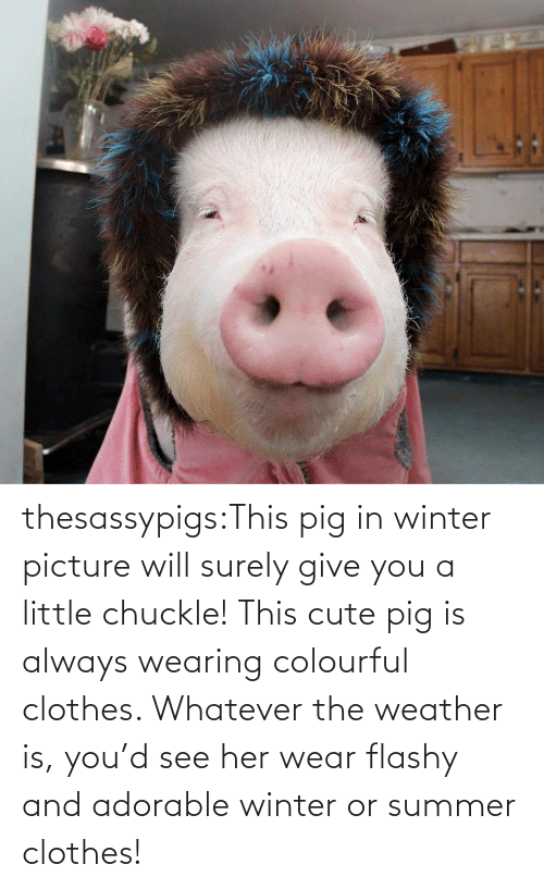 Target: thesassypigs:This pig in winter picture will surely give you a little chuckle! This cute pig is always wearing colourful clothes. Whatever the weather is, you'd see her wear flashy and adorable winter or summer clothes!