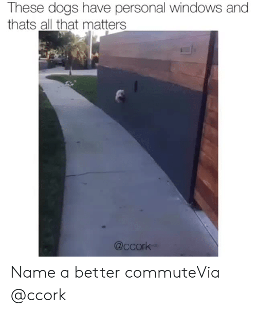 Dogs, Instagram, and Target: These dogs have personal windows and  thats all that matters  @ccork Name a better commuteVia @ccork