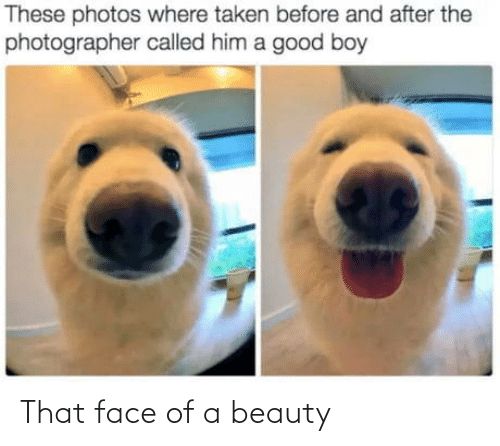 that face: These photos where taken before and after the  photographer called him a good boy That face of a beauty