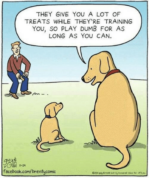 Dumb, Facebook, and facebook.com: THEY GIVE YOU A LOT OF  TREATS WHILE THEY RE TRAINING  YOu, so PLAY DUMB FOR AS  LONG AS YOU CAN  11-24  facebook.com/brevitycomic  for S  Oal gy&red sst tans