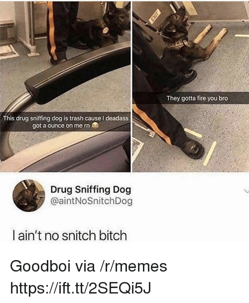 Bitch, Fire, and Memes: They gotta fire you bro  This drug sniffing dog is trash cause I deadass  got a ounce on me rn  Drug Sniffing Dog  @aintNoSnitchDog  ain't no snitch bitch Goodboi via /r/memes https://ift.tt/2SEQi5J