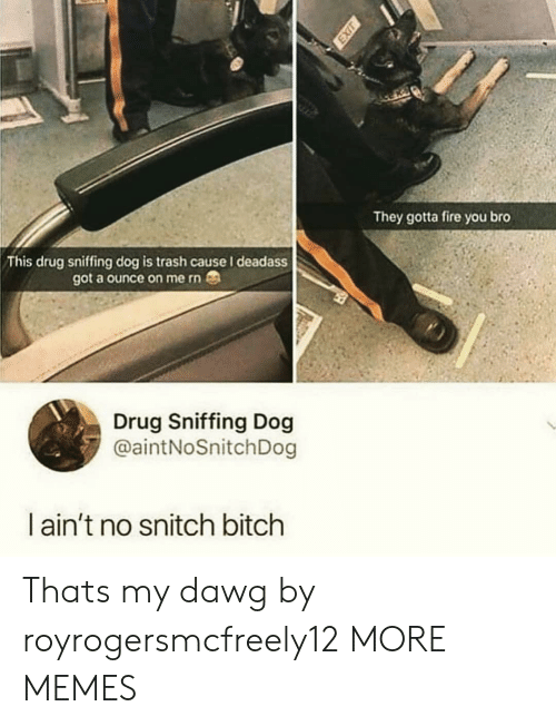 dawg: They gotta fire you bro  This drug sniffing dog is trash cause I deadass  got a ounce on me rn  Drug Sniffing Dog  @aintNoSnitchDog  l ain't no snitch bitch Thats my dawg by royrogersmcfreely12 MORE MEMES