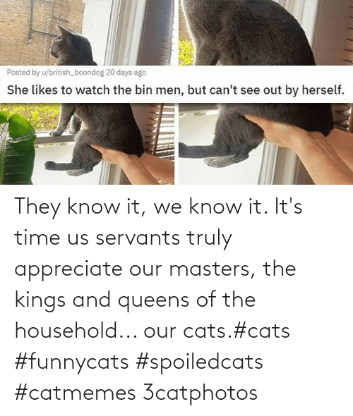 Know It: They know it, we know it. It's time us servants truly appreciate our masters, the kings and queens of the household... our cats.#cats #funnycats #spoiledcats #catmemes 3catphotos